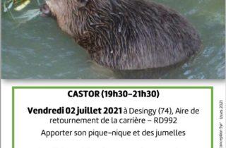 Affiche-Syr'Usses-Castor.Jpeg